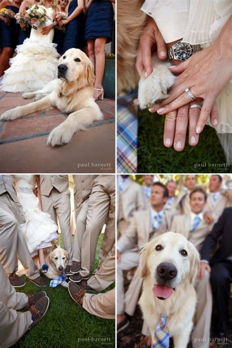17 Best ideas about Dog Ring Bearers on Pinterest   Dog