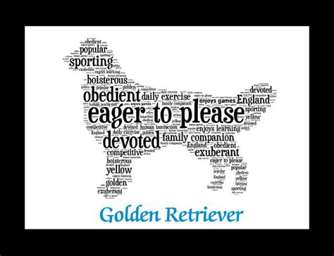 best dryer for golden retrievers 17 best golden retriever quotes on puppy quotes golden and qoutes