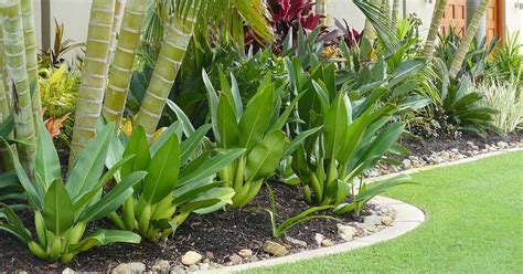 How To Create A Tropical Backyard by Tropical Landscaping Design Create Your Own Getaway