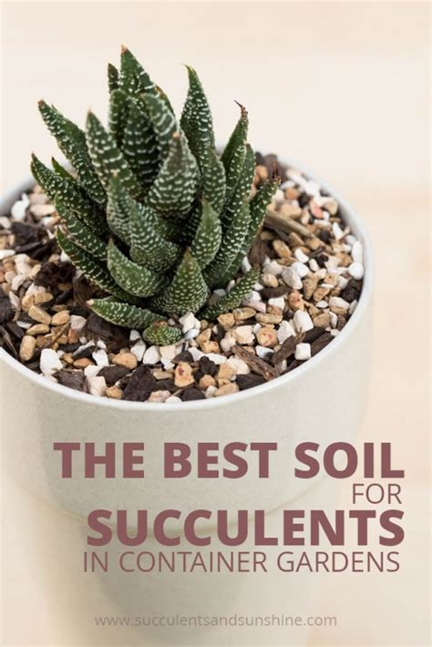 Soil Mix For Outdoor In Ground Succulents - well draining soil for succulent container gardens