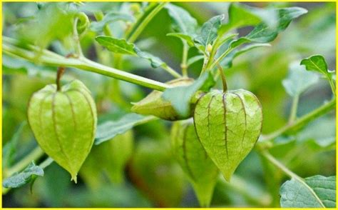 supernatural plants  restorative plants ambien tologuilla