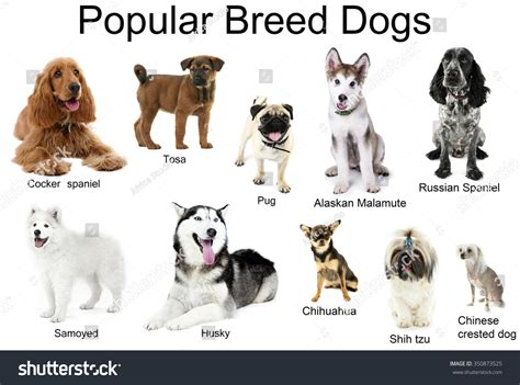 show me types of dogs different breeds dogs together isolated on stock photo 350873525