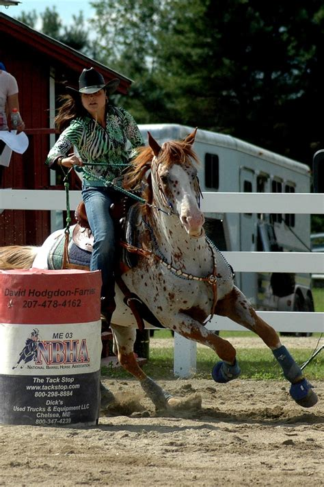 barrel racing horse hair braids appy indian horse appaloosa horse equine native american