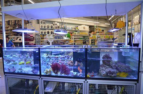 vendita vasche acquario negozio animali e vendita acquari a frosinone