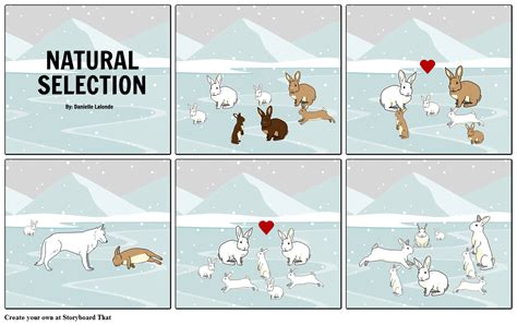 what is natural section natural selection storyboard by danielle608