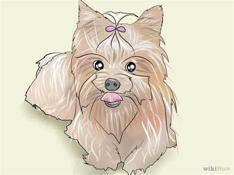 how fast does yorkie hair grow 9 ways to groom a terrier wikihow