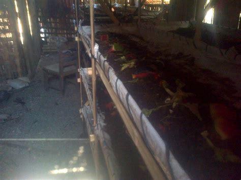 Cacing Klaten komunitas peternak cacing klaten home