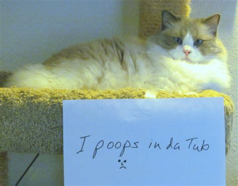 cat keeps pooping in bathtub my cat keeps pooping in the bathtub 28 images the pet