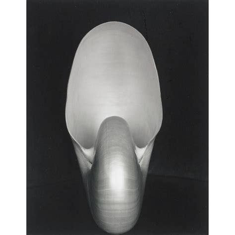 edward weston 1886 1958 icons edward weston 1886 1958 nautilus