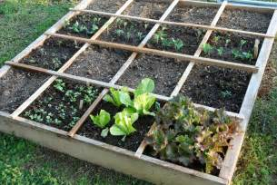 better for planting square foot gardening vs row