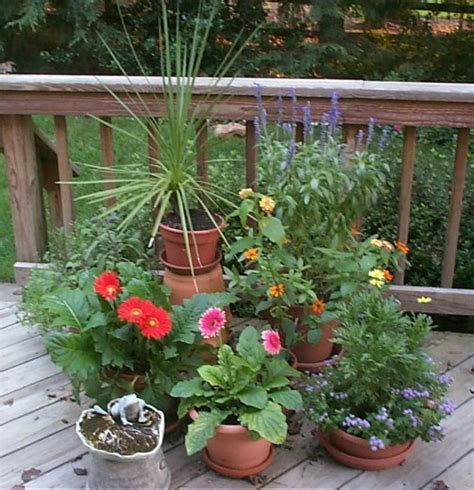 Potted Plants For Patio by Desired Properties July 2010