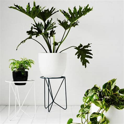 thinking about modern indoor plants butterfly sold out ivy muse