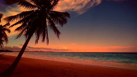 colors  tropical sunset palm trees silhouettes  sandy