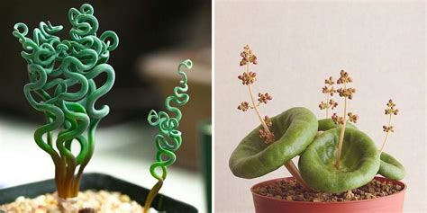 10 Strange, But Also Beautiful, Houseplants You Never Knew