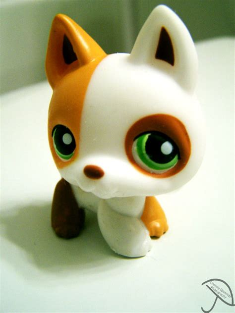 littlest pet shop dogs littlest pet shop ii by chelseaisapansy on deviantart