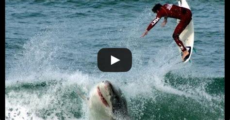 best shark attack top 10 shark attack beaches funny4share