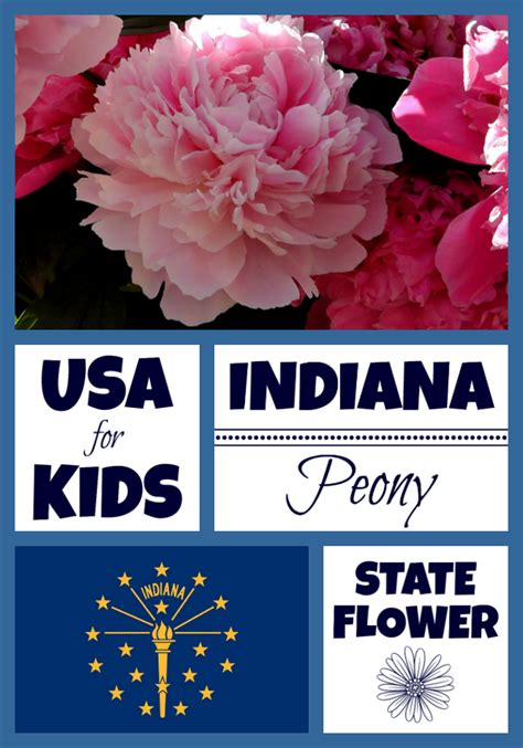 100 indiana usa state name indiana state flower peony by usa facts for