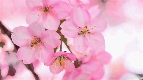 Flowers Pink footage pink flowers