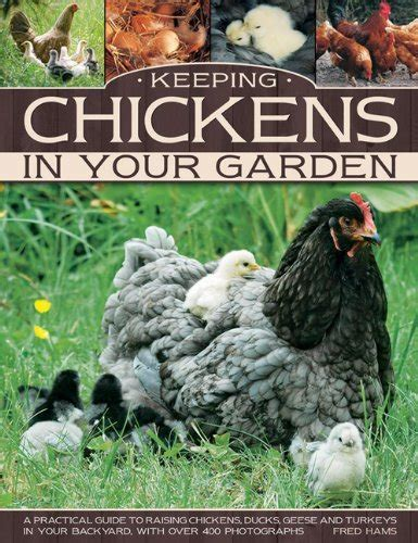 how to keep chickens in your backyard keeping chickens in your garden a practical guide to raising chickens