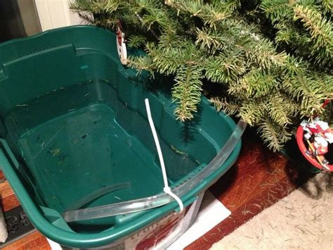 5 weird easy ways to water your christmas tree