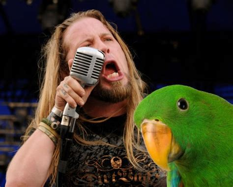 laugh of the day the parrot sings drowning pool