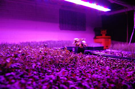 led  hid hydroponic grow shops garden centers