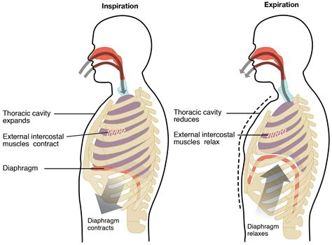 pattern breathing definition paradoxical breathing definition causes and treatments
