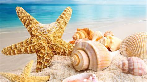 L Shells by Sfondo Quot Stella Marina E Conchiglie Quot 1920 X 1080 Hd