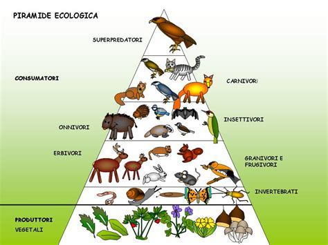 catena alimentare bosco catena alimentare bosco quadrocucina03