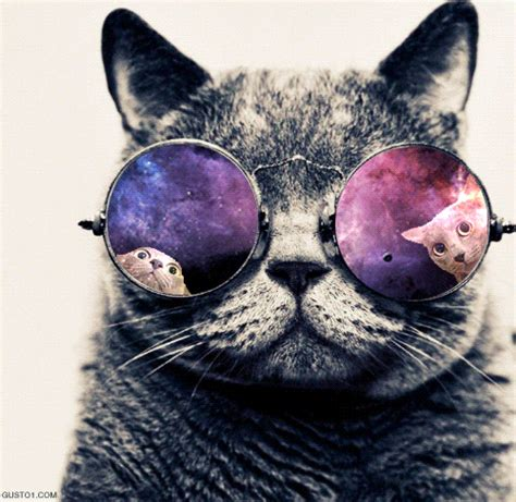 hippie pattern gif cosmic space hippie cat gifs gif abyss