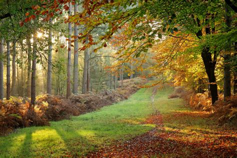forest glade autumn forest glade 169 2015 alan mackenzie www