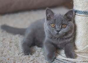 girl cat names grey stripes
