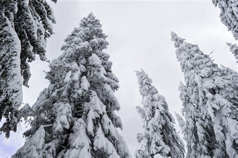 walmartcom mountain frost pine free images landscape tree nature outdoor branch snow cold winter sky wood white