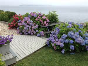 Garden Patio Pots Hamptons Hydrangeas Beach Style Landscape New York