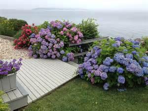 Hamptons Hydrangeas Beach Style Landscape New York