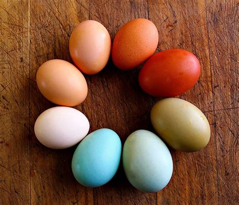 egg colors chickens lay eggs in so many colors and variations of a