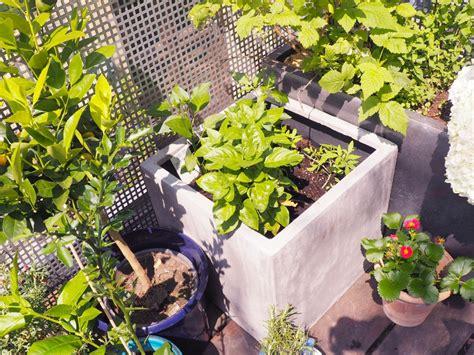 gardening balkon gardening gem 252 se auf dem balkon teil 2 wie