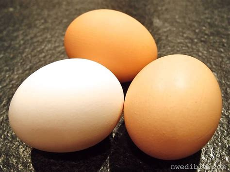 the backyard store backyard eggs vs store bought eggs a side by side comparison northwest edible life