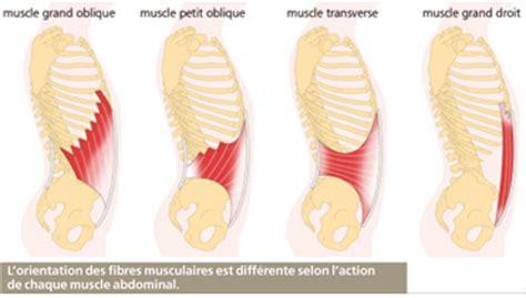 addominali obliqui interni le corps humain les muscles abdominaux abdos