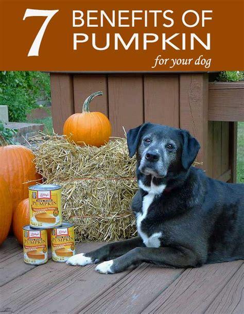 pumpkin for diarrhea how much pumpkin to give a for diarrhea