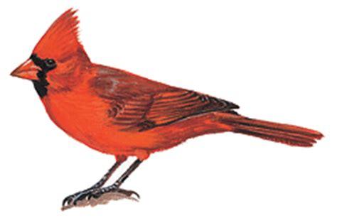state bird of north carolina introduction to geography of north carolina geography of