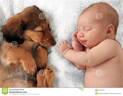sleeping baby and puppy sleeping baby and puppy stock image image of asleep 57463675