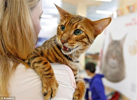 Kiev's annual cat show includes rare felines from dwarf