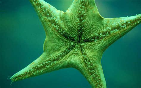 wallpaper green star green star fish every shade of green