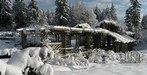 Winter Garden Ideas Uk Winter Garden Ideas Only On Home By Excite Uk