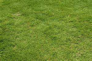 No Grass Backyard by Green Lawn Grass Background Free Stock Photo Public