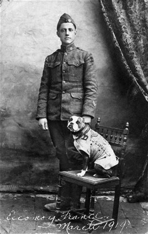Ww1 Sergeant Stubby How Did Animals Even Slugs Serve In World War I National Museum Of American History
