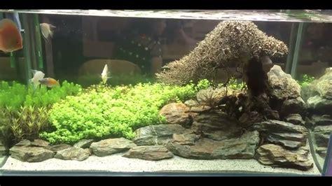 Driftwood Aquascape by Bonsai Driftwood Aquascaping