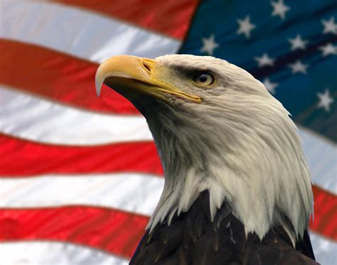 American Eagle American Eagle Day Wallpapers Hd