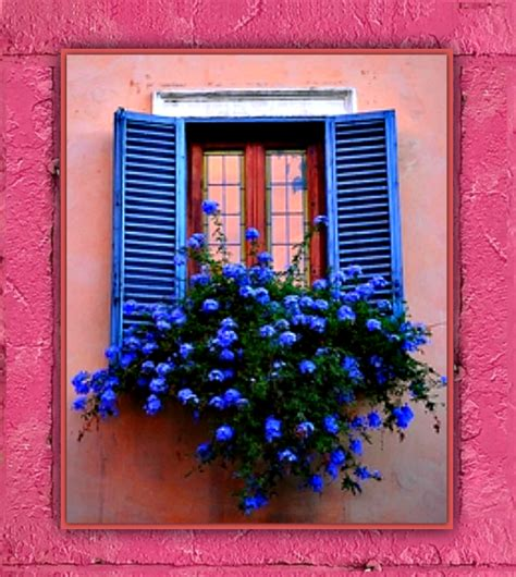 win with flower pretty window flower box pictures photos and images for